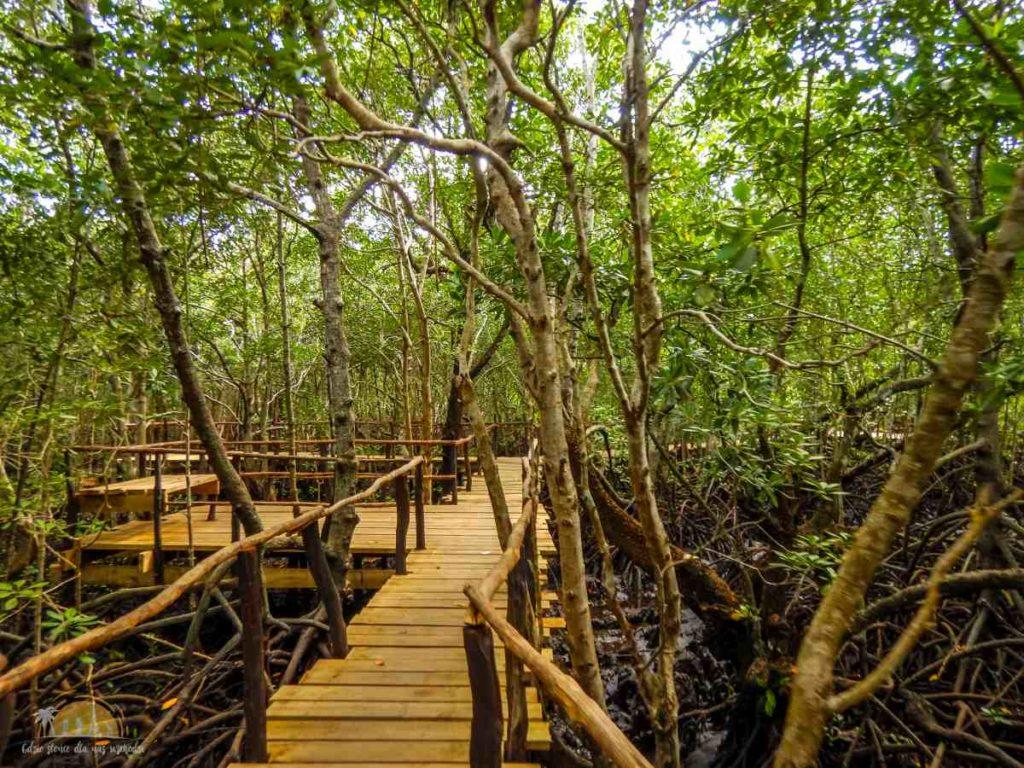 Zanzibar Atrakcje Jozani Forest (112)