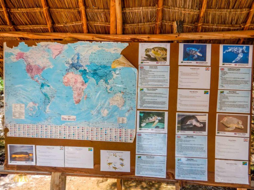 Zanzibar Atrakcje Nungwi (64)