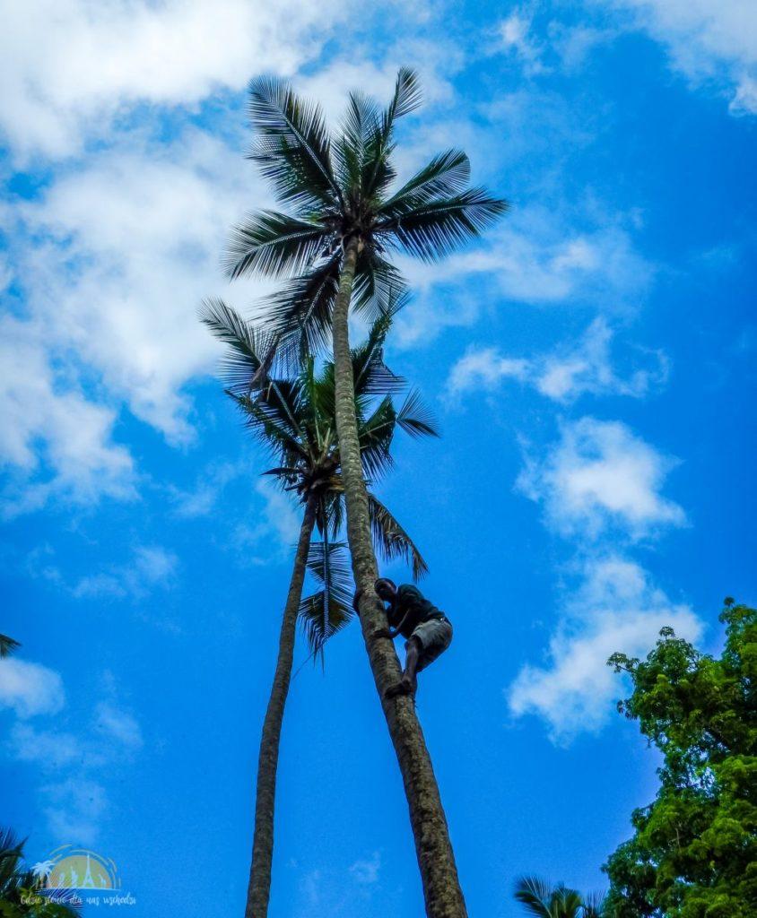 Zanzibar Atrakcje Spice Tour (49b)