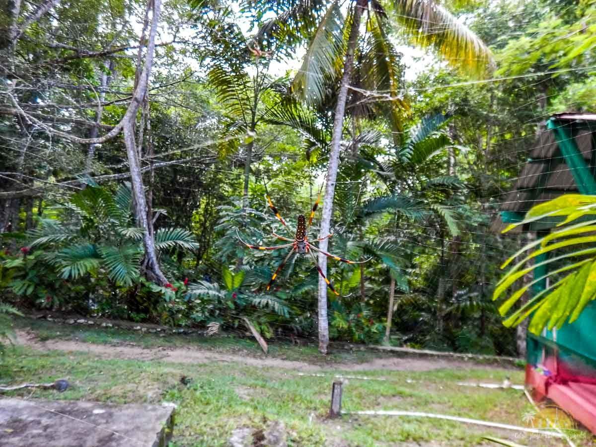 Jamajka atrakcje wodospady dunns river falls 10