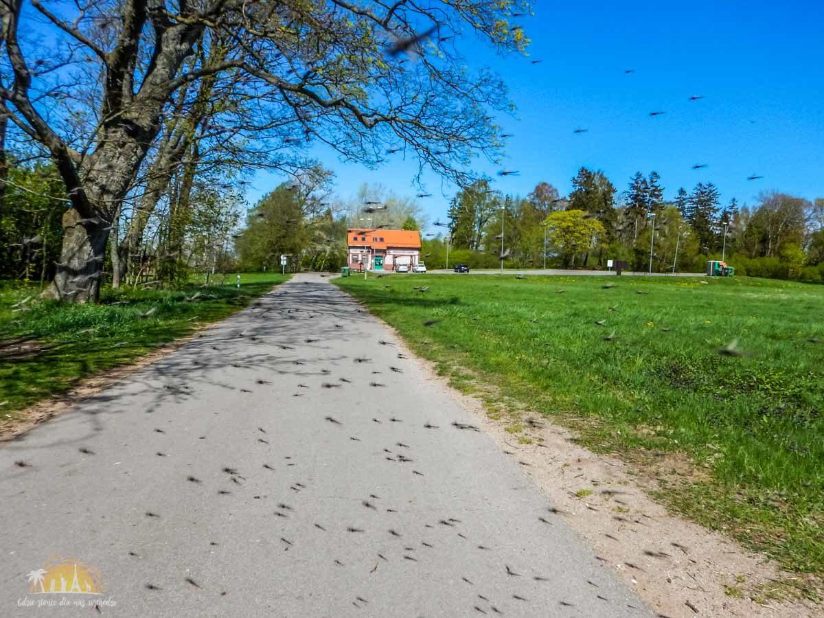 Litwa Delta Niemna 12