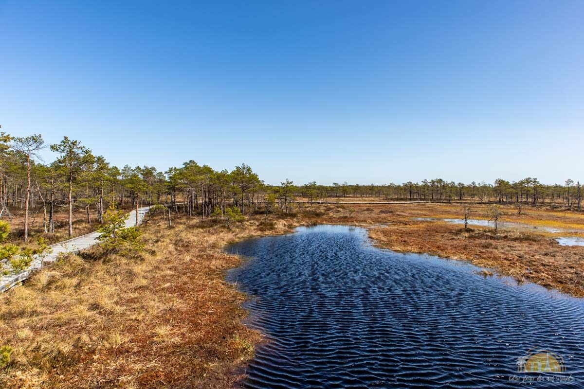 Soomaa Park Narodowy Estonia atrakcje bagna 18