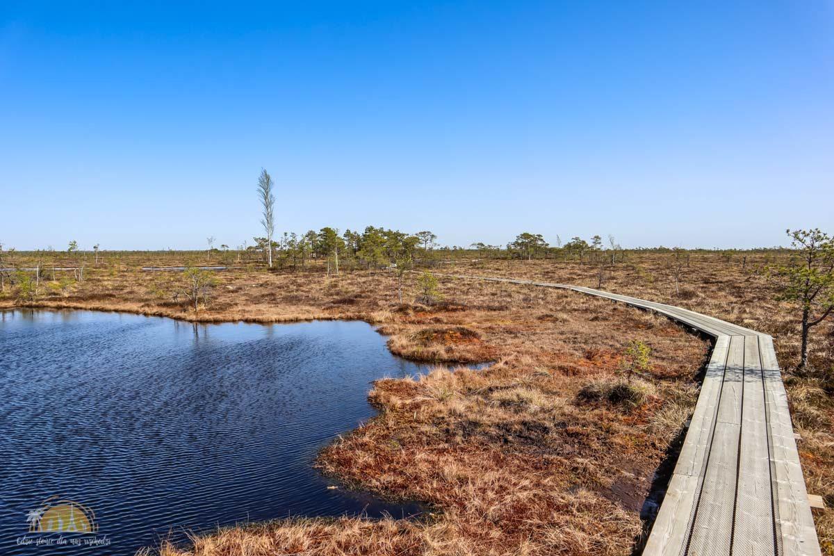 Soomaa Park Narodowy Estonia atrakcje jezioro 10