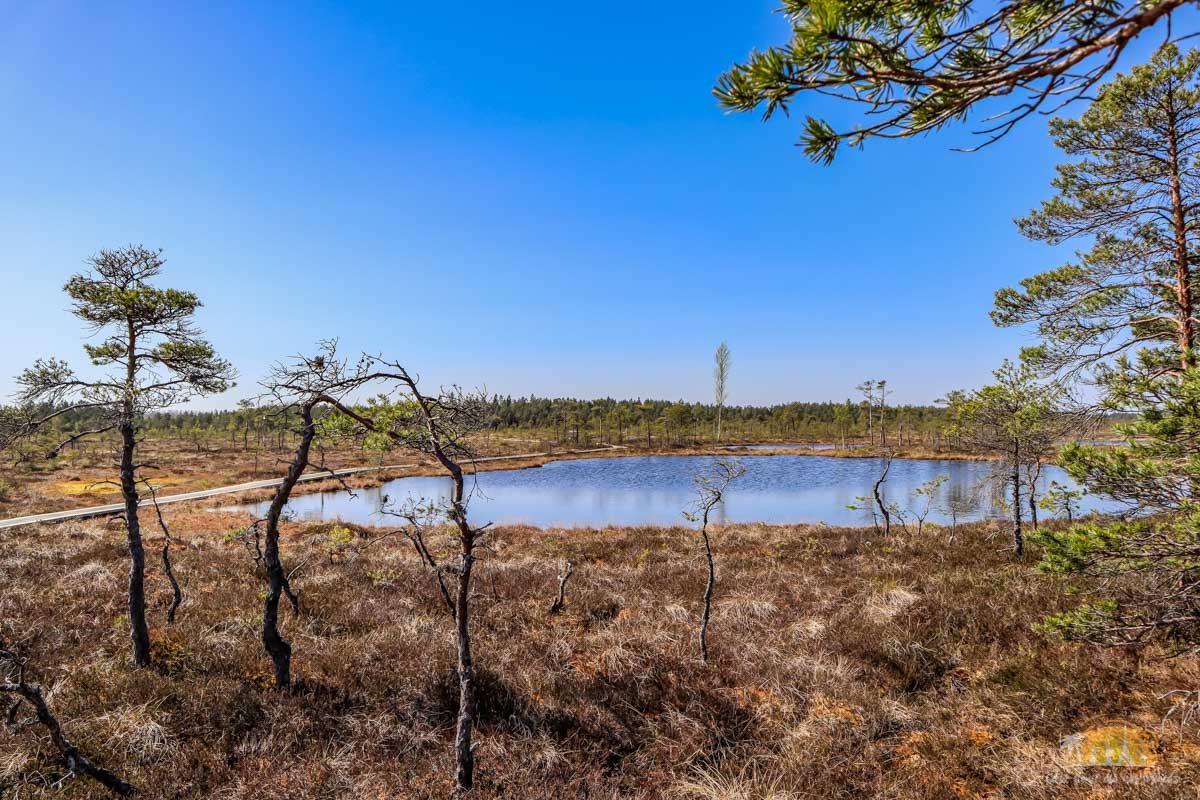 Soomaa Park Narodowy Estonia atrakcje jezioro 15