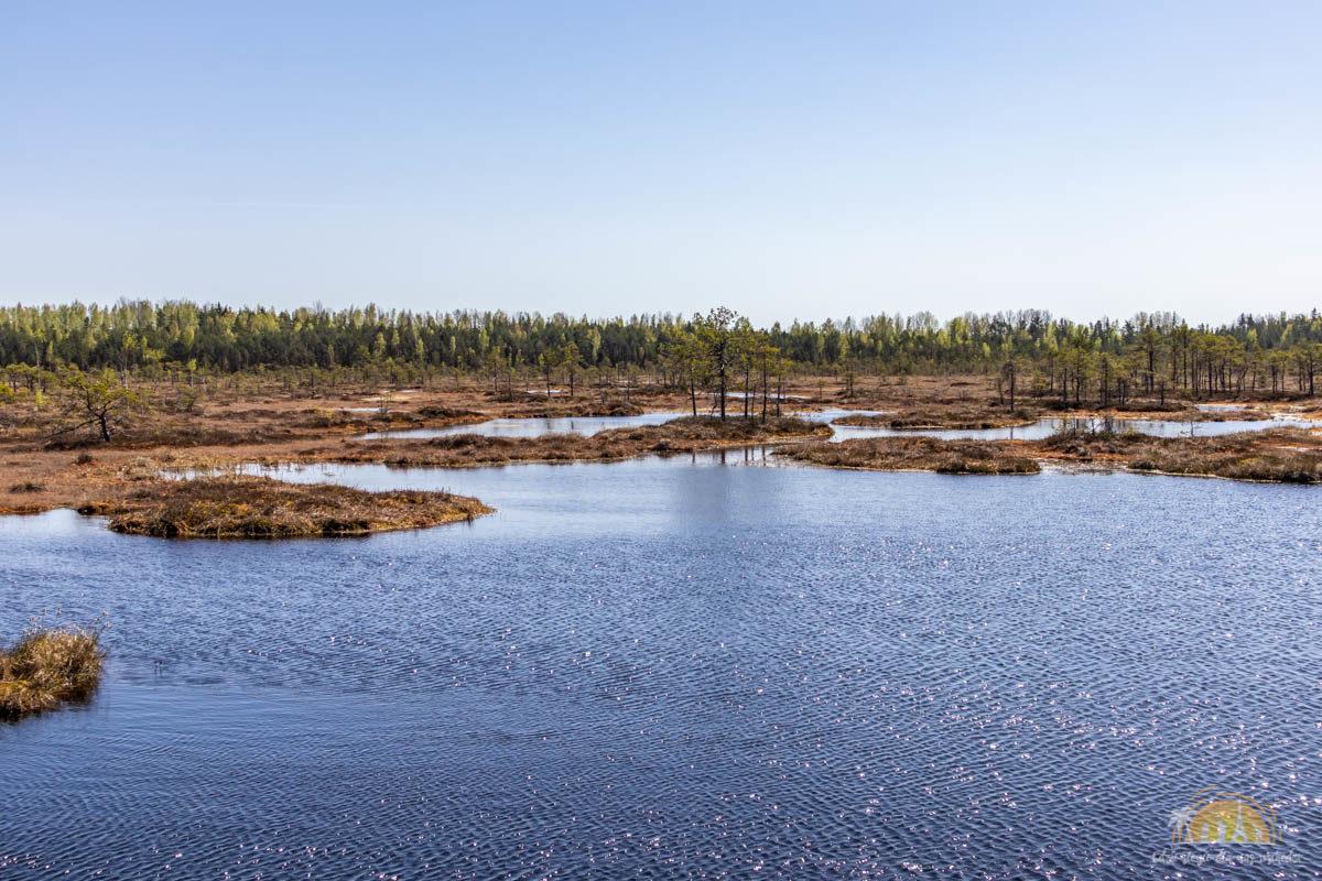 Soomaa Park Narodowy Estonia atrakcje jezioro 21