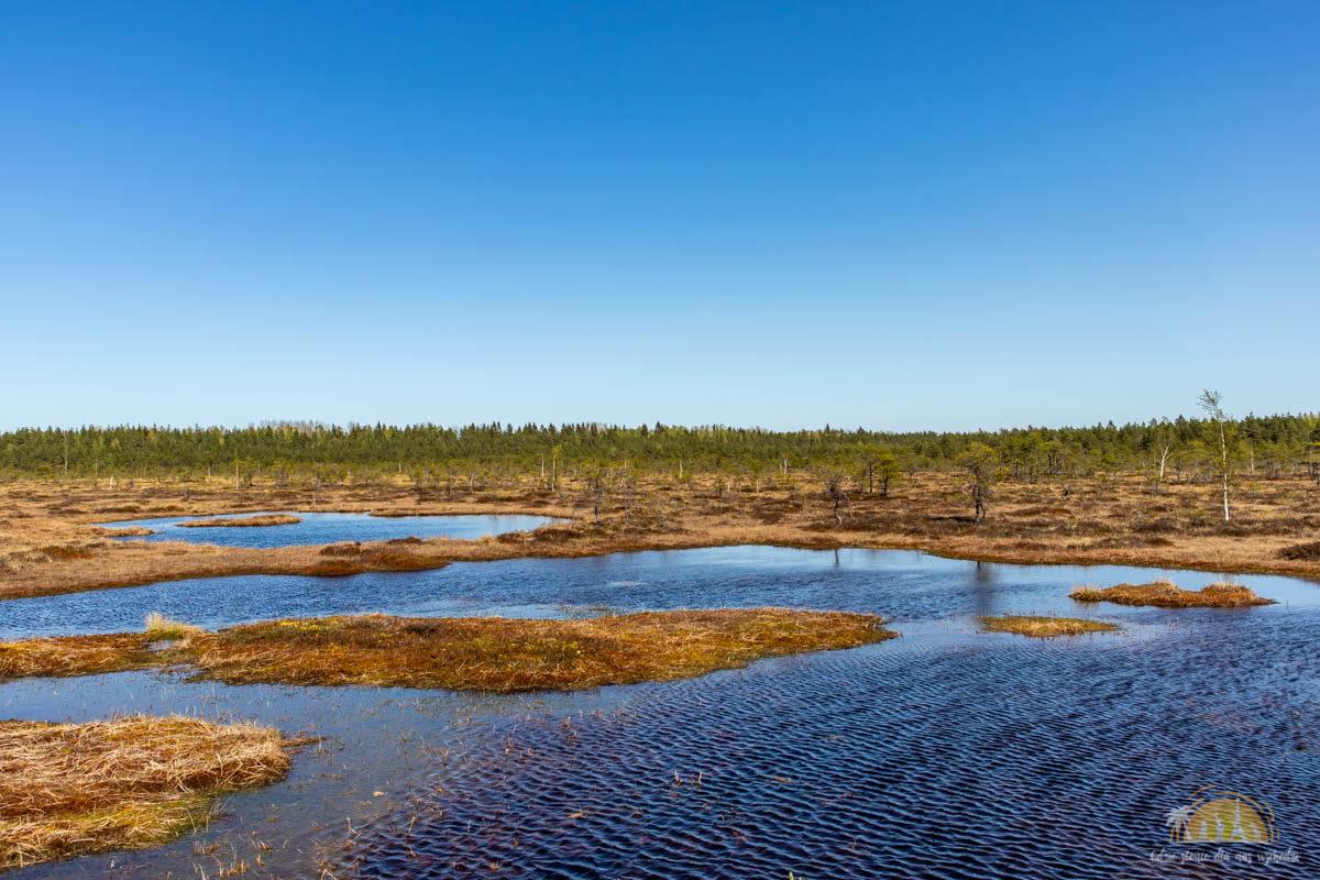 Soomaa Park Narodowy Estonia atrakcje jezioro 22