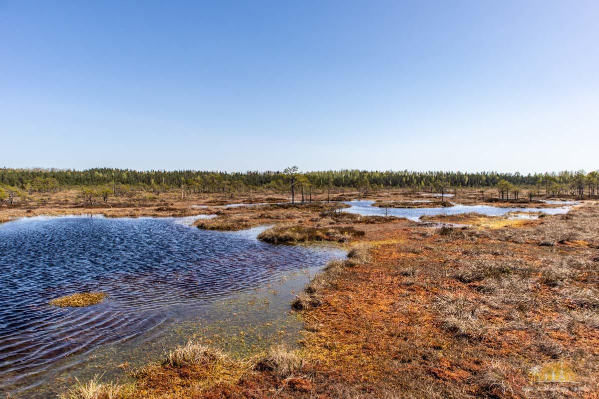 Soomaa Park Narodowy Estonia atrakcje jezioro 23