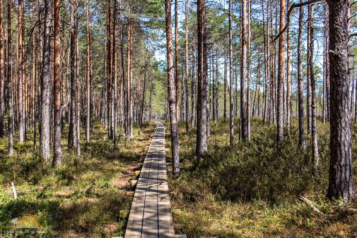 Soomaa Park Narodowy Estonia atrakcje las 19