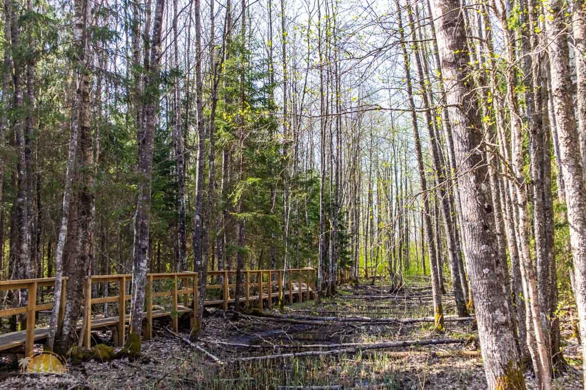 Soomaa Park Narodowy Estonia atrakcje las 4
