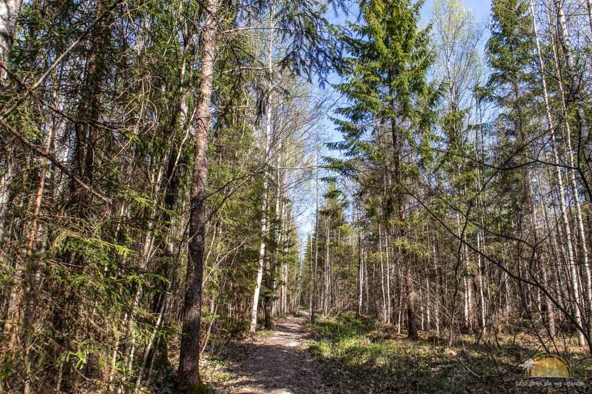 Soomaa Park Narodowy Estonia atrakcje las 5