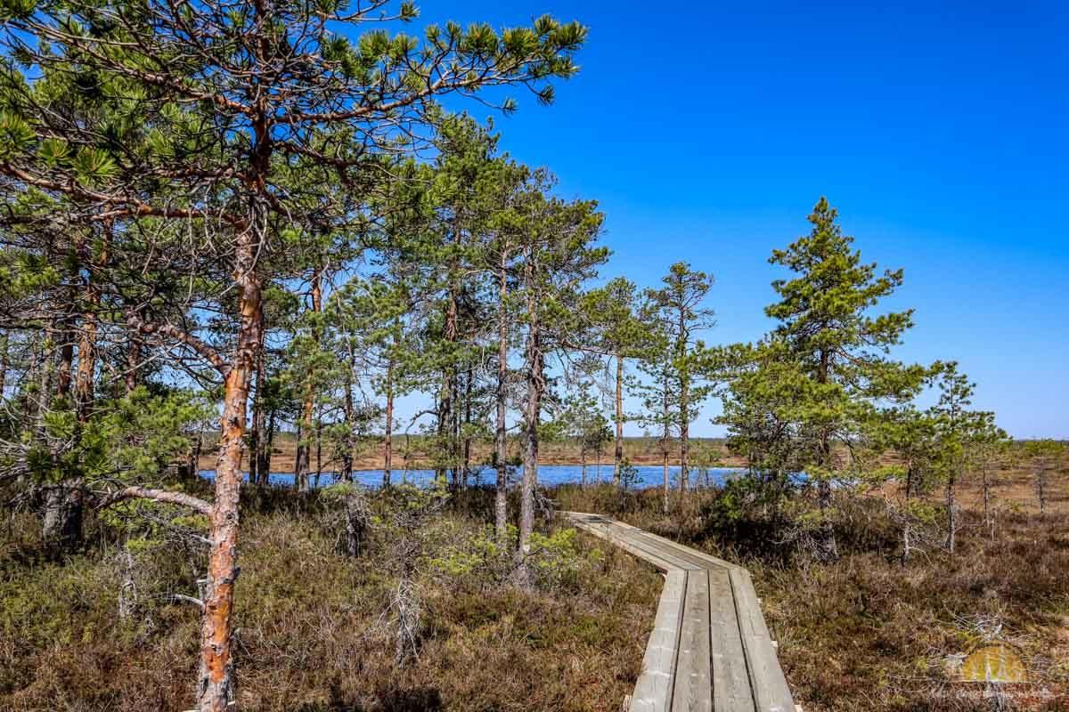 Soomaa Park Narodowy Estonia atrakcje sciezka 14