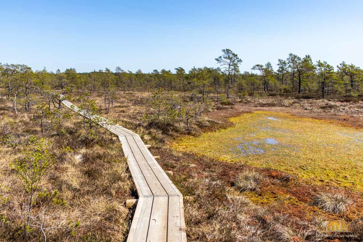 Soomaa Park Narodowy Estonia atrakcje sciezka 20