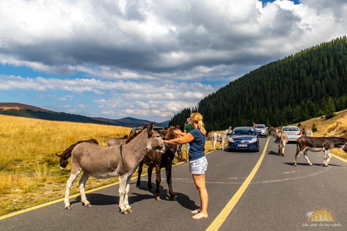 Rumunia - przygotowania 11 road trip